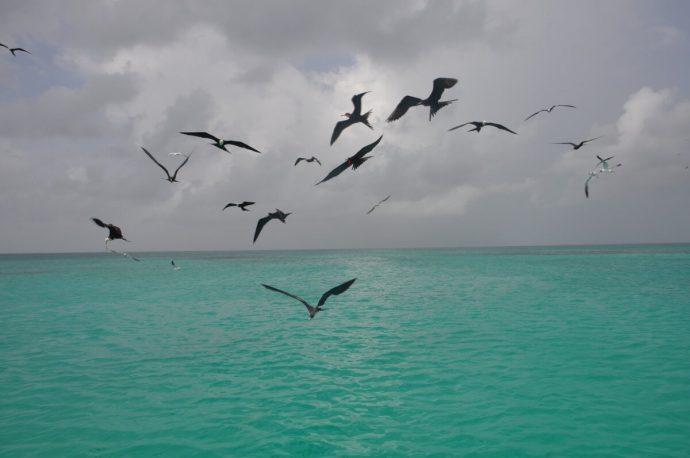Croisière Guadeloupe Oiseaux