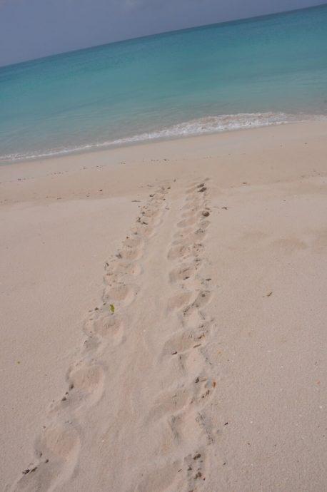 Croisière Guadeloupe trace d'une tortue