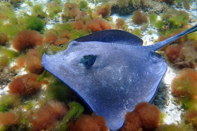 croisière Guadeloupe plongée sous marine