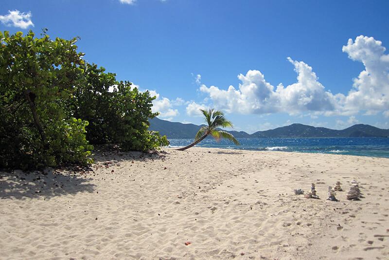 croisière Guadeloupe Palmier