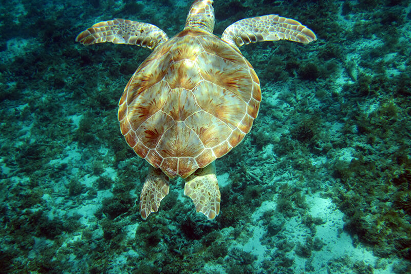 croisière Guadeloupe tortue