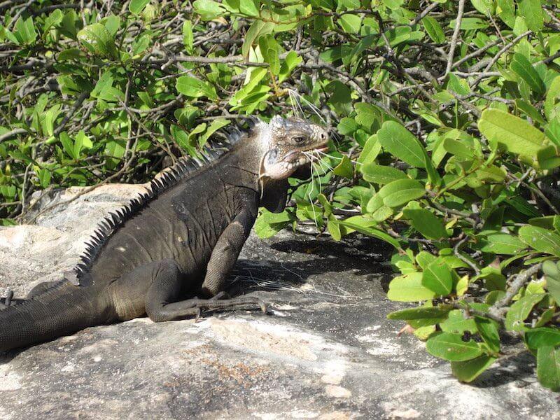 reptile croisiere guadeloupe